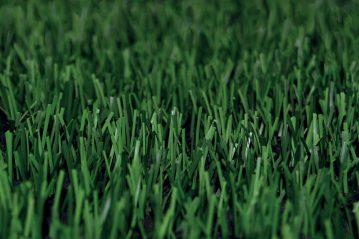 Quadro d'insieme del tappeto erboso