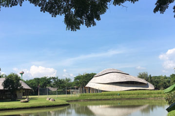 bambu-foto1