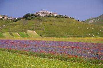 Castelluccio di Norcia (Shutterstock)