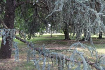Il parco di Villa Finzi