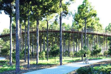 cycling-through-the-trees-burolandschap-limburg-belgium2