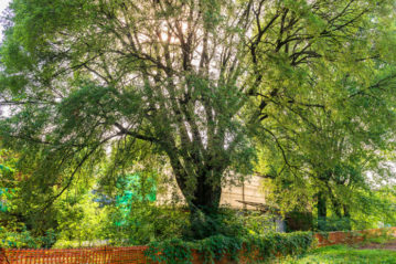 gasometro-albero