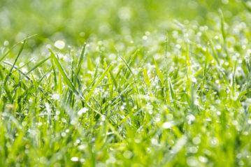 herbatech - concimi, sementi, biostimolanti, ammendanti e vernici traccialinee