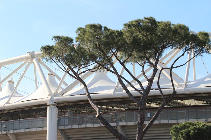 Roma, pini davanti allo Stadio Olimpico.