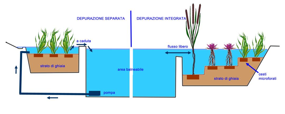 biopiscine-schema