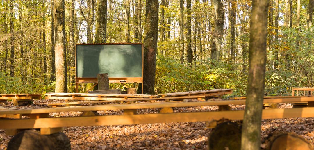 Lavagna nel bosco (foto Marcel Conrad / Shutterstock).